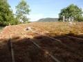 Maison des Roches : le toit végétal