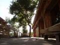 Maison des Roches - la terrasse boisée et l'arbre